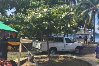 Almond Tree Replacement